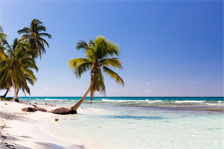 palm - Coconut palm trees and white beach by turquoise clear water, Del Este National Park (Parque Nacional del Este), Dominican Republic, Caribbean Stock Photo - Premium Royalty-Free, Code: 600-07311212