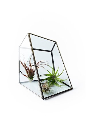 Three Airplants in Glass Case on White Background Stock Photo - Premium Royalty-Free, Code: 600-07311254