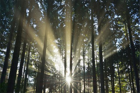 streaming - Sun shining through Forest, Schleswig-Holstein, Germany Stock Photo - Premium Royalty-Free, Code: 600-07431235