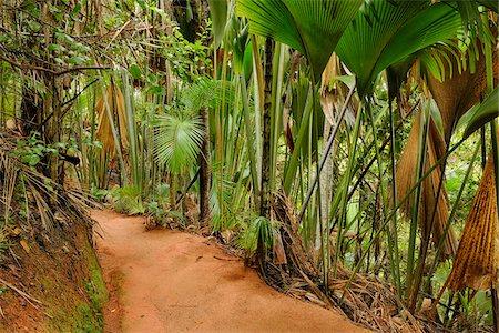 Pathway through Rainforest, Vallee de Mai Nature Preserve, Praslin, Seychelles Stock Photo - Premium Royalty-Free, Code: 600-07453833
