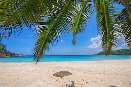palm - Palm Fronds and Anse Intendance with Turqouise Water, Mahe, Seychelles Stock Photo - Premium Royalty-Free, Code: 600-07453874