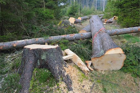 Felled spruces in forest, Spessart, Hesse, Germany, Europe Stock Photo - Premium Royalty-Free, Code: 600-07487435