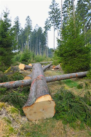 Felled spruces in forest, Spessart, Hesse, Germany, Europe Stock Photo - Premium Royalty-Free, Code: 600-07487436