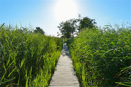 Wooden Planks Path through Reeds with Sun, Summer, Darsser Ort, Prerow, Darss, Fischland-Darss-Zingst, Baltic Sea, Western Pomerania, Germany Stock Photo - Premium Royalty-Free, Code: 600-07564069