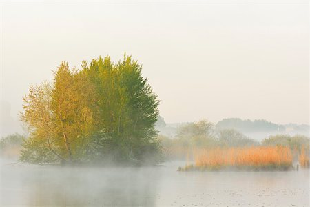 dreamy - Lake in Early Morning Mist in Springtime, Hesse, Germany Stock Photo - Premium Royalty-Free, Code: 600-07561363