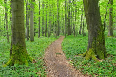 forest - Path through Beech Forest, Hainich National Park, Thuringia, Germany, Europe Stock Photo - Premium Royalty-Free, Code: 600-07599868