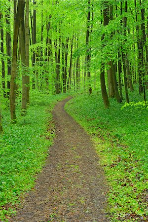 Path through beech forest, Hainich National Park, Thuringia, Germany, Europe Stock Photo - Premium Royalty-Free, Code: 600-07599897