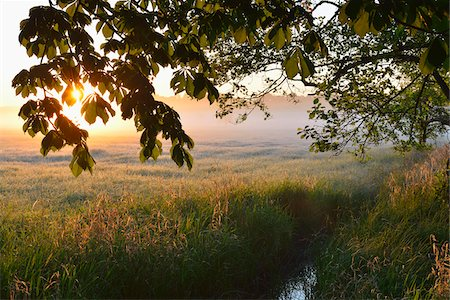 Trees branches and field at sunrise, Nature Reserve Moenchbruch, Moerfelden-Walldorf, Hesse, Germany, Europe Stock Photo - Premium Royalty-Free, Code: 600-07599905