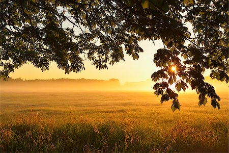 fog (weather) - Chestnut tree branches and field at sunrise, Nature Reserve Moenchbruch, Moerfelden-Walldorf, Hesse, Germany, Europe Stock Photo - Premium Royalty-Free, Code: 600-07599908