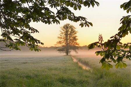 streams scenic nobody - Tree branche and tree in field in early mornging light, Nature Reserve Moenchbruch, Moerfelden-Walldorf, Hesse, Germany, Europe Stock Photo - Premium Royalty-Free, Code: 600-07599901