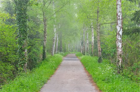 forest - Path with Morning Mist, Spring, Mondfeld, Mainfranken, Franconia, Baden Wurttemberg, Germany Stock Photo - Premium Royalty-Free, Code: 600-07599940