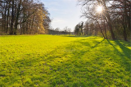 Meadow in Forest with Sun in early Spring, Park Schonbusch, Aschaffenburg, Spessart, Lower Franconia, Bavaria, Germany Stock Photo - Premium Royalty-Free, Code: 600-07591262