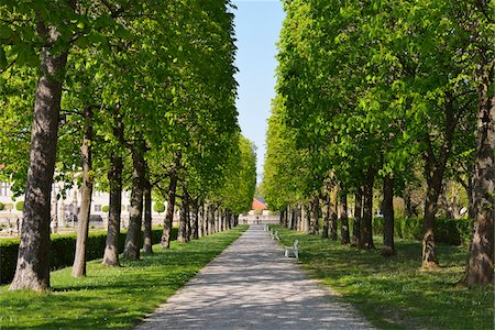 Chestnut Tree Avenue in Spring, Castle Park, Weikersheim, Baden-Wurttemberg, Germany Stock Photo - Premium Royalty-Free, Code: 600-07591274