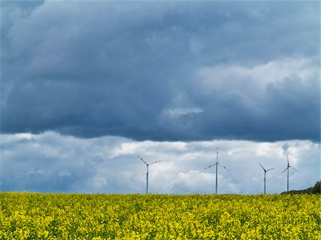 Wind turbines with canola field in foreground with stormy sky, Weser Hills, North Rhine-Westphalia, Germany Stock Photo - Premium Royalty-Free, Code: 600-07608328