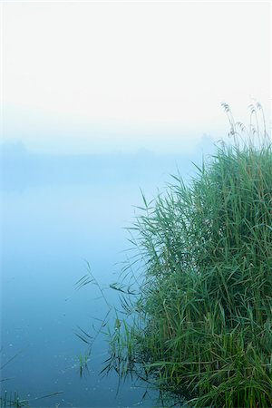 Lake and Reeds on Misty Morning, Fischland-Darss-Zingst, Mecklenburg-Western Pomerania, Germany Stock Photo - Premium Royalty-Free, Code: 600-07636987