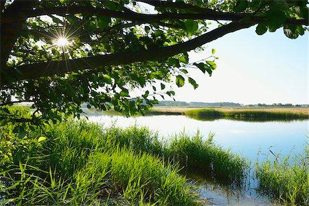 Prerowstrom in Morning, Prerow, Fischland-Darss-Zingst, Mecklenburg-Western Pomerania, Germany Stock Photo - Premium Royalty-Free, Code: 600-07637007