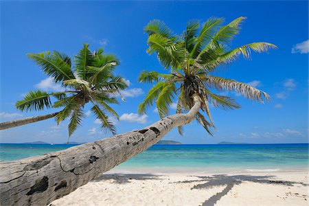 seychelles - Palm Trees on Beach with Indian Ocean, La Digue, Seychelles Stock Photo - Premium Royalty-Free, Code: 600-07653904