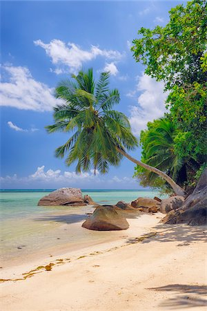 exotic outdoors - Rocks and Palm Trees at Beach, Anse a la Mouche, Mahe, Seychelles Stock Photo - Premium Royalty-Free, Code: 600-07653906