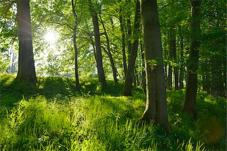 forest - Sun through Forest in Spring, Vogelsberg District, Hesse, Germany Stock Photo - Premium Royalty-Free, Code: 600-07674809