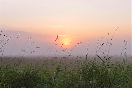 Close-up of blades of Grass on misty morning at sunrise, Nature Reserve Moenchbruch, Moerfelden-Walldorf, Hesse, Germany, Europe Stock Photo - Premium Royalty-Free, Code: 600-07672129