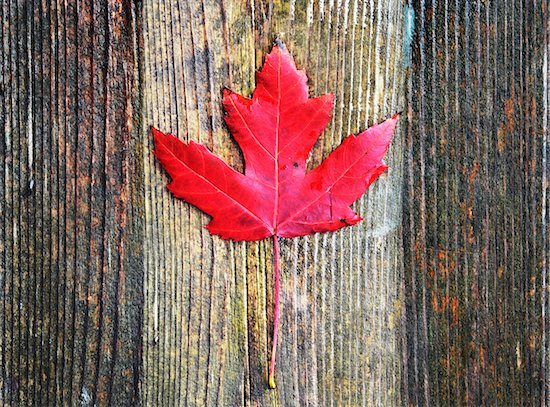 View of bright red maple leaf on old wooden background, Canada Stock Photo - Premium Royalty-Free, Artist: Andrew Kolb, Image code: 600-07783638