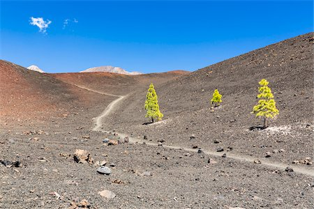 dirt - Hiking path by lava field with Canary Island pine (Pinus canariensis), Teide National Park, Tenerife, Canary Islands Stock Photo - Premium Royalty-Free, Code: 600-07783867