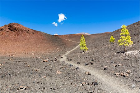 Hiking path by lava field with Canary Island pine (Pinus canariensis), Teide National Park, Tenerife, Canary Islands Stock Photo - Premium Royalty-Free, Code: 600-07783868