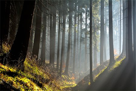 streaming - Morning haze in coniferus forest, Harz, Lower Saxony, Germany Stock Photo - Premium Royalty-Free, Code: 600-07802693