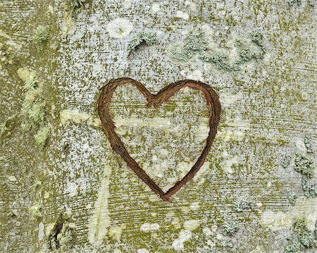 Carved Heart on Tree, Nienhagen, Bad Doberan, Western Pomerania, Germany Stock Photo - Premium Royalty-Free, Code: 600-07802905