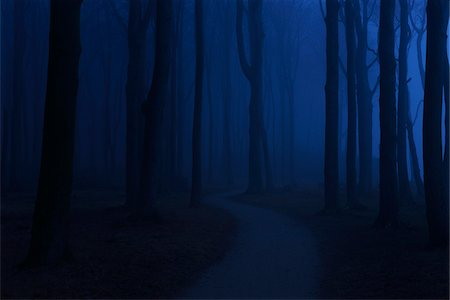 forest - Coastal Beech Forest with Path and Fog in Night, Gespensterwald, Nienhagen, Bad Doberan, Western Pomerania, Germany Stock Photo - Premium Royalty-Free, Code: 600-07802918