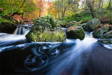 Autumn colours at the wild river La Hoegne, near the High Fens (Hautes Fagnes), Ardennes Forest, Walloon Region, Belgium Stock Photo - Premium Royalty-Free, Code: 600-07844370