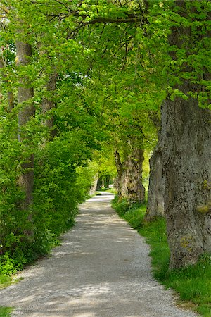 Lakeside Path with Trees, Stegen am Ammersee, Lake Ammersee, Fuenfseenland, Upper Bavaria, Bavaria, Germany Stock Photo - Premium Royalty-Free, Code: 600-07844419