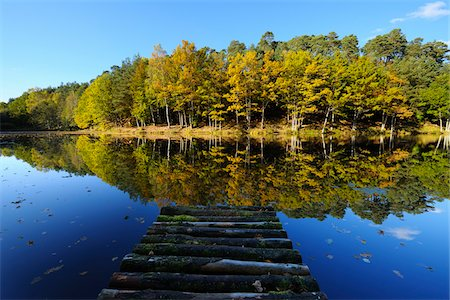fall trees lake - Lake with Autumn Colored Trees and Wooden Jetty, Stuedenbach, Eppenbrunn, Pfaelzerwald, Rhineland-Palatinate, Germany Stock Photo - Premium Royalty-Free, Code: 600-07844434