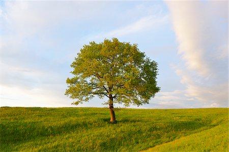 Meadow with Tree, Upper Bavaria, Bavaria, Germany Stock Photo - Premium Royalty-Free, Code: 600-07844431