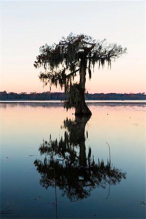 Silhouetted Swamp Cypress Tree (Taxodium distichum) on Frosty Autumn Morning at Dawn, Lake Martin, Louisiana, USA Stock Photo - Premium Royalty-Free, Code: 600-07844487