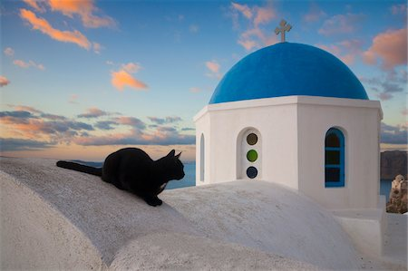 Domestic Cat (Felis catus) on Wall near Church, Oia, Santorini, Greece Stock Photo - Premium Royalty-Free, Code: 600-07844635