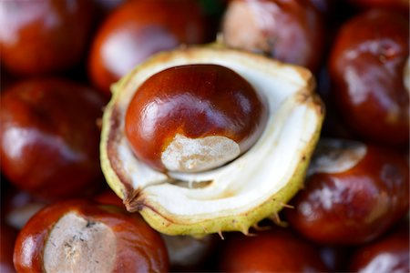 Close-up of horse-chestnuts (Aesculus hippocastanum) in a garden in summer, Bavaria, Germany Stock Photo - Premium Royalty-Free, Code: 600-07848029