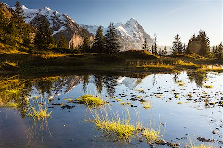 fall trees lake - Mountain Fir Trees Reflecting in Alpine Lake with Mount Eiger at Sunset, Bernese Alps, Switzerland Stock Photo - Premium Royalty-Free, Code: 600-07853963