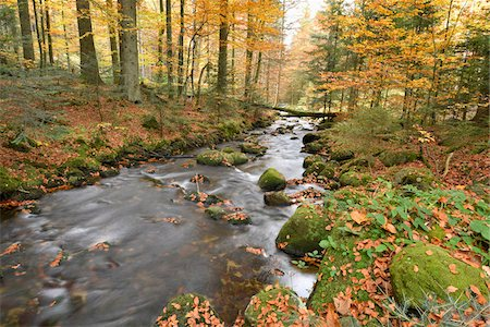 stream - Landscape of a river (Kleine Ohe) flowing through the forest in autumn, Bavarian Forest National Park, Bavaria, Germany Stock Photo - Premium Royalty-Free, Code: 600-07911204