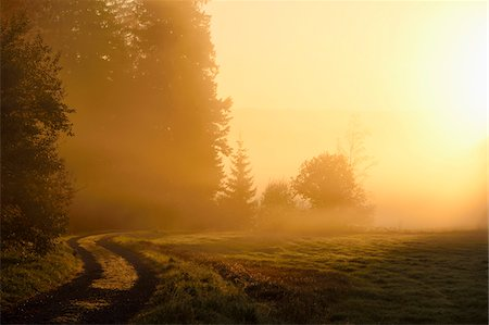 Landscape at sunrise, glowing on an early, foggy morning, Bavarian Forest National Park, Bavaria, Germany Stock Photo - Premium Royalty-Free, Code: 600-07911215