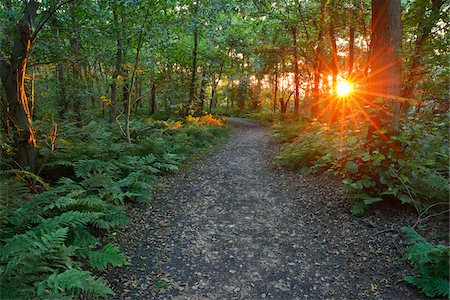 Forest Path at Sunset, Summer, Norderney, East Frisia Island, North Sea, Lower Saxony, Germany Stock Photo - Premium Royalty-Free, Code: 600-07945206