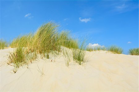 Dunes in Summer, Norderney, East Frisia Island, North Sea, Lower Saxony, Germany Stock Photo - Premium Royalty-Free, Code: 600-07945216