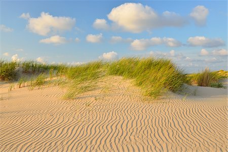 Dunes in Summer, Norderney, East Frisia Island, North Sea, Lower Saxony, Germany Stock Photo - Premium Royalty-Free, Code: 600-07945218