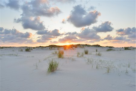 Dunes at Sunset in Summer, Norderney, East Frisia Island, North Sea, Lower Saxony, Germany Stock Photo - Premium Royalty-Free, Code: 600-07945225