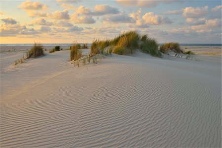 Dunes in Summer at sunset, Norderney, East Frisia Island, North Sea, Lower Saxony, Germany Stock Photo - Premium Royalty-Free, Code: 600-07945220