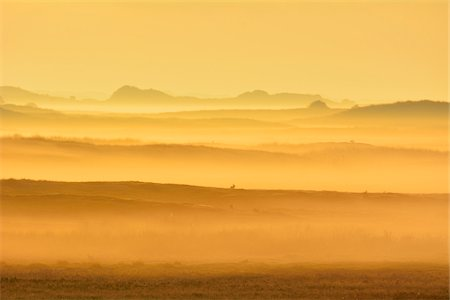 Dune Landscape with Golden Glow and Morning Mist, Summer, Norderney, East Frisia Island, North Sea, Lower Saxony, Germany Stock Photo - Premium Royalty-Free, Code: 600-07945237