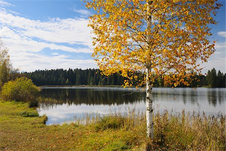 Lake in Autumn, Hegratsried, Lake Hegratsrieder See, Bavaria, Germany Stock Photo - Premium Royalty-Free, Code: 600-07945338
