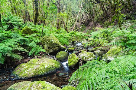 Dense Vegetation in Cloud Forest by Creek, Garajonay National Park, La Gomera, Canary Islands, Spain Stock Photo - Premium Royalty-Free, Code: 600-07965751