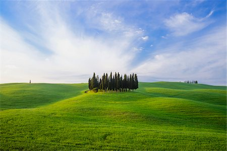 Cypress Grove near San Quirico d'Orcia, Val d'Orcia, Siena, Tuscany, Italy Stock Photo - Premium Royalty-Free, Code: 600-07966029