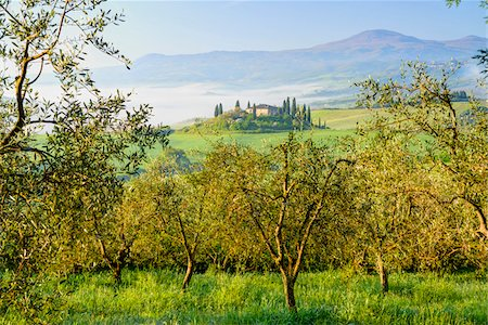 Podere Belvedere near San Quirico d'Orcia, Val d'Orcia, Siena, Tuscany, Italy Stock Photo - Premium Royalty-Free, Code: 600-07966038